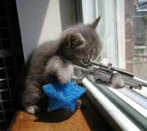 Even kittens are going bad.