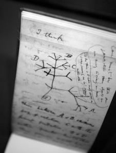 Darwins tree
