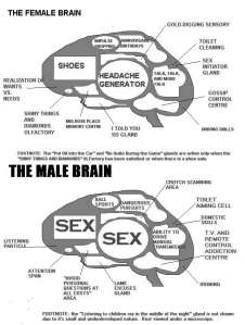 090313-female-male-brain-bw